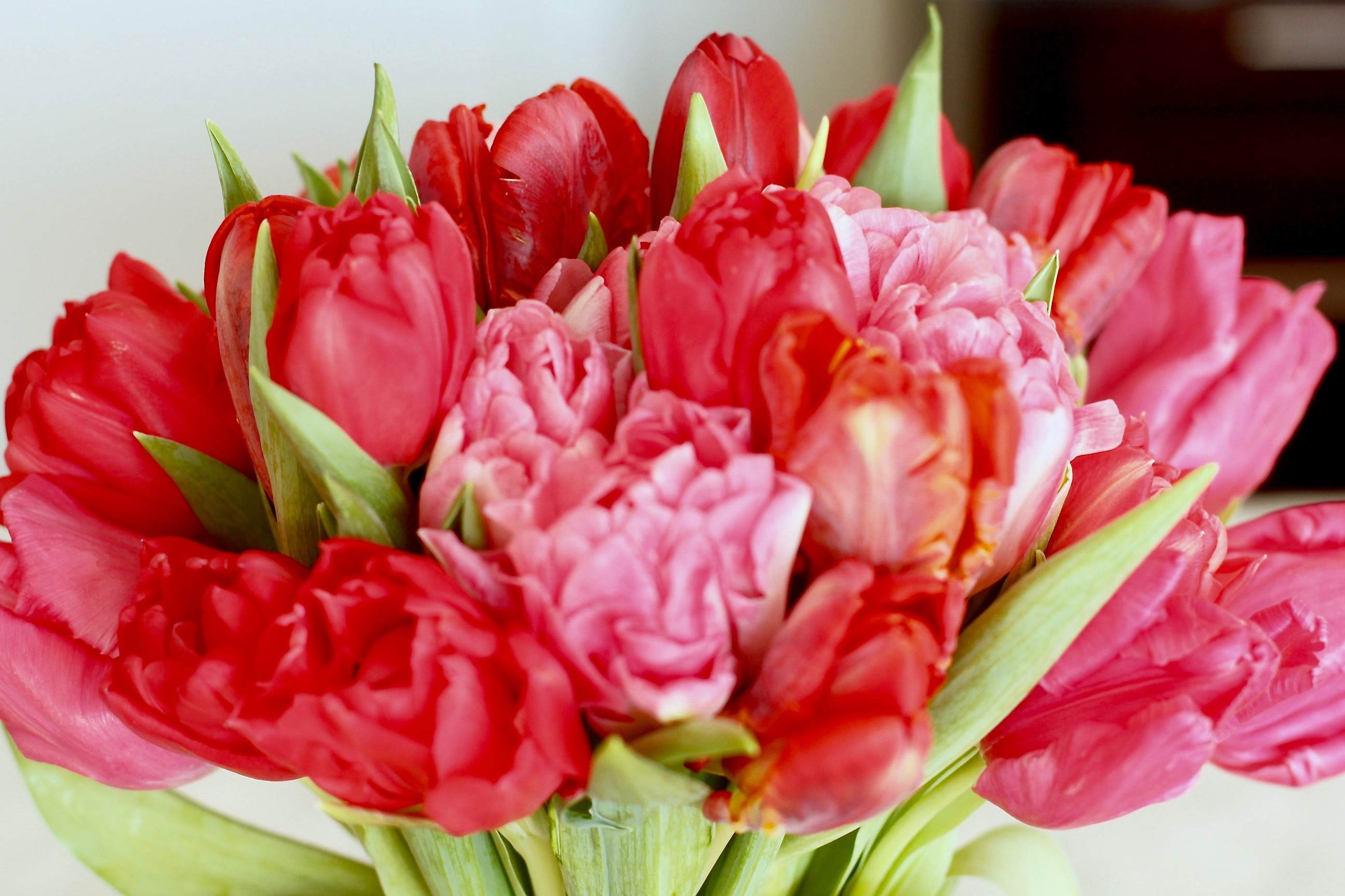 missyonmadison, melissa tierney, ftd flowers, valentines day, vday, vday 2016, valentines day 2016, roses, tulips, valentines day flowers, inspiration, inspiring women, la blogger, fashion blogger, fashion blog, it cosmetics, ulta beauty, vday makeup, valentines day cosmetics, valentines day makeup, valentines day m&ms,